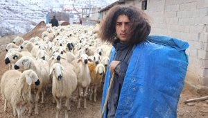 300 koyunun çobanı üniversite mezunu bir genç