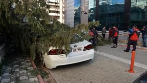 Rüzgar 50 metrelik çam ağacını devirdi