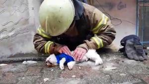 Köpeği hayata döndürmek için suni teneffüs yaptı