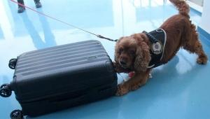 Havalimanında 1 kilo 100 gram uyuşturucu ele geçirildi