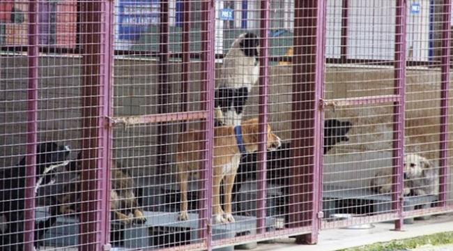 Hayvan Barınağını Basan Kadın 100 Köpeği Serbest Bıraktı