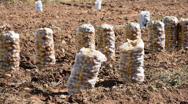 Patates ithalatında yeni dönem