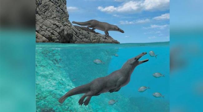 4 bacaklı balina fosili keşfedildi