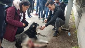 Çarptığı köpeğin başında dakikalarca bekledi