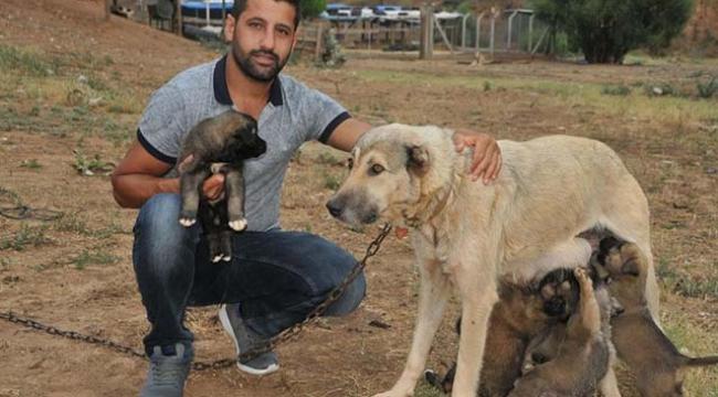 Sel sularına kapılan 6 köpek yavrusunu kurtardı