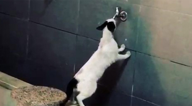 Sıcaktan bunalan kedi şaşırttı