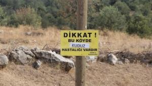 Köyde kuduz paniği
