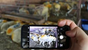 'Mobil' kurban satışı ilgi görüyor