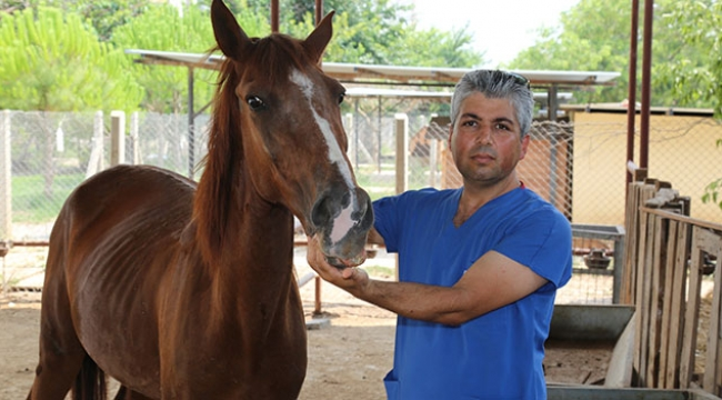 Tedavisi tamamlanan at sahiplendirildi