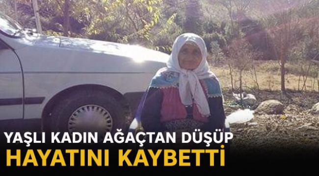 Yaşlı kadın ağaçtan düşüp hayatını kaybetti