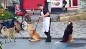Esnaf süpürge ile köpeklere masaj yaptı