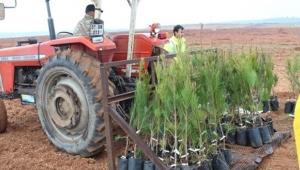 Kızılçam Klonal Genotipik Tohum Bahçesi kuruldu