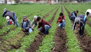 Çiftçi üretime aralıksız devam ediyor