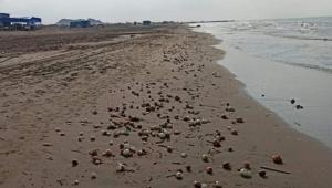 Karataş sahillerine soğan vurdu