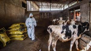 'Üç gün hastalığı hayvandan insana geçmiyor'