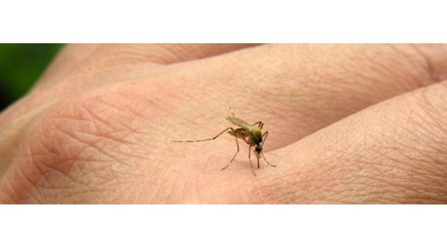 Sivrisinek en çok erkekleri ısırıyor