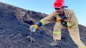 2 sansar yavrusunu orman işçileri kurtardı