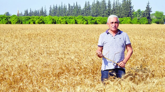 'Buğday üretimi 17,6 milyon tona geriledi'