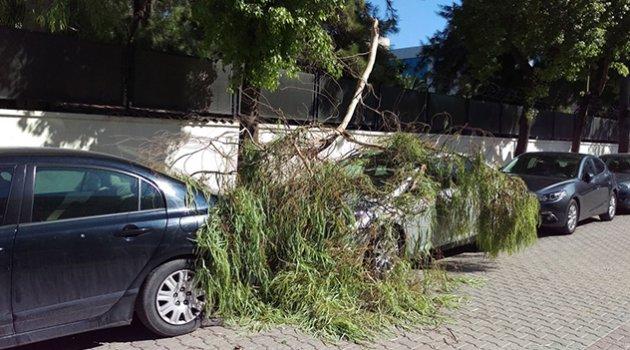 Hakimin arabasının üzerine ağaç dalı düştü