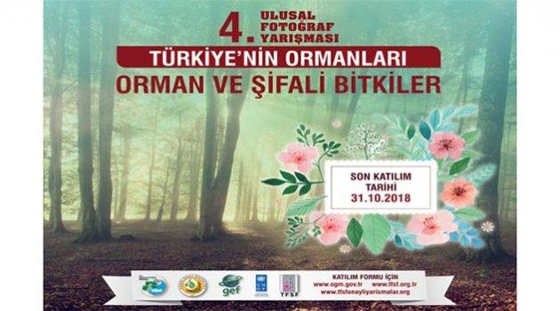 'Orman ve Şifalı Bitkiler' fotoğraf yarışması başlıyor