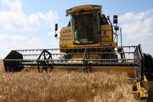 (özel Haber) Çukurova'da Buğday Hasadı Başladı
