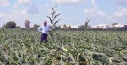 Hortum tarım alanlarını vurdu