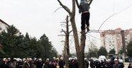 Ağaçların kesilmesini önlemek için ağaca çıktı