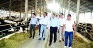 Kozan'da süt hayvancılığı gelişiyor