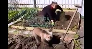 Bahçe işlerine yardımcı ayı