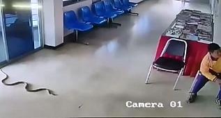 Karakola yılan girdi