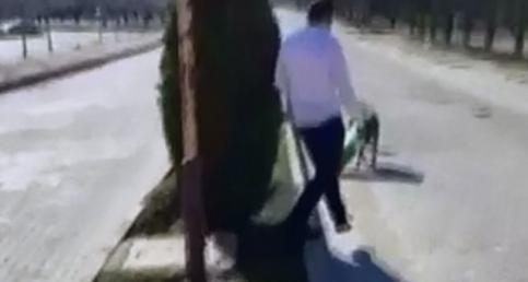 Başına karton kutu sıkışan köpek