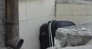 Şüpheli pakete kedinin tepkisi gülümsetti