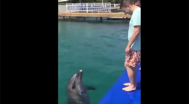 Yunus Balığı Horon Teper Mi?