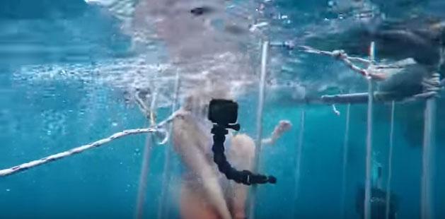 Köpek balığı böyle saldırdı