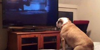 Korku Filmi İzleyen Bulldog