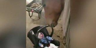 Bebek bakıcılığı yapan at görenleri şoke ediyor!