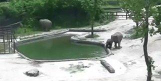 Anne filin panik anı kamerada