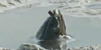 Havuzda bir anda türü bilinmeyen gizemli yaratık belirdi