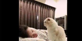 Kedi sahibini uyandırmaya kararlı
