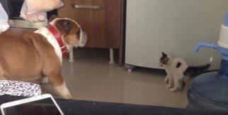 Yavru kediden korkan köpek