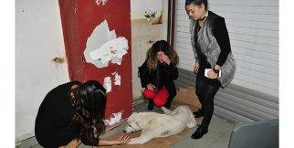 Adana'da köpeği bıçakla öldürmek istediler