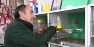 Tarihi evde muhabbet kuşu besliyor