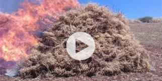 5 ton nohut ateşe verildi